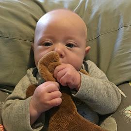 Yummy by Sandy Stevens Krassinger - Babies & Children Babies ( ears, hands, baby, moose, stuffed animal, boy, eyes )
