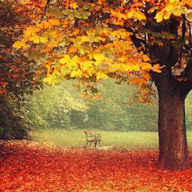 20171018-DSC_2424 by Zsolt Zsigmond - City,  Street & Park  City Parks ( bench, tree, autumn, colors, fall, yellow, light )