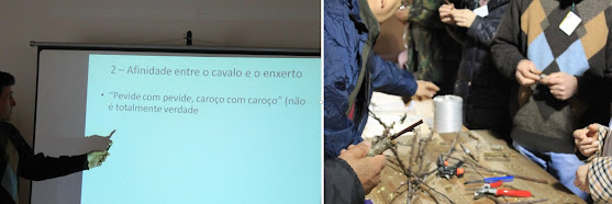 Curso de Enxertia em Árvores de Fruto 4ª edição – Teórico e Prático (4h) – 4 Maio 2019