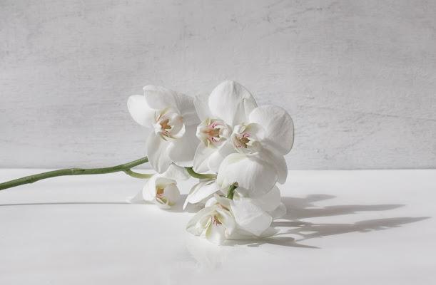 L'eleganza dell'orchidea di Barbara Surimi