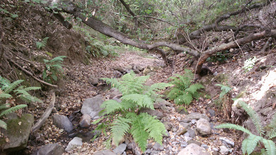 Photo: The creek by Claremont across from Alvarado.