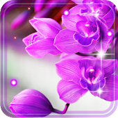Orchid Free 2016