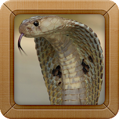 King Cobra Wallpapers Picture
