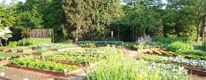 Photo: Short albeit blurry panorama of the vegetable garden.