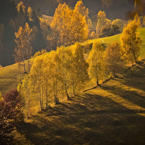 shadows in light by Lili Screciu - Landscapes Mountains & Hills ( trees, romania, landscape, light )