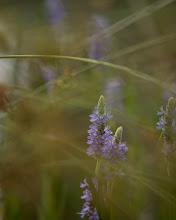Photo: Through The Weeds