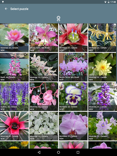 Jigsaw Puzzle: Flowers screenshot 9