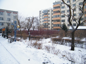 Photo: the front garden of emakingir's house, after a new snow in early spring 2011. 王华家前院的花园在2011初春新雪中。