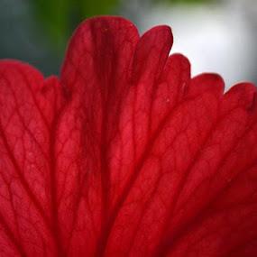 Flower Veins by Abhishek Majumdar - Nature Up Close Leaves & Grasses ( saurabh, madhur, sarbajit, prithvi, nitesh )