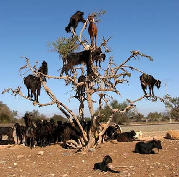 Photo: Такими становятся деревья после пасьбы
