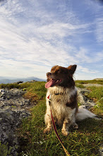 Photo: Happy dog at the summit of Camels Hump, Camel's Hump State Park