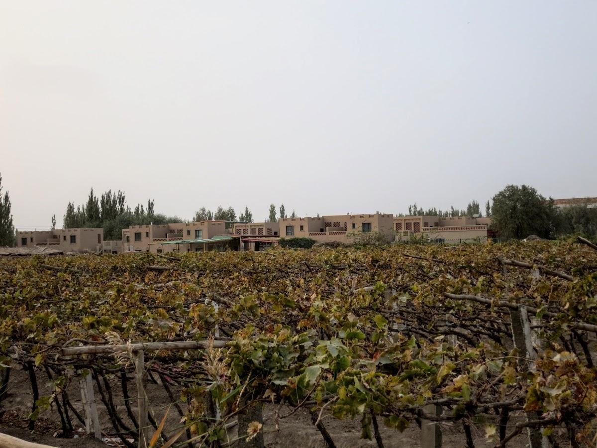 China. Xinjiang Turpan . Vineyards close to new house development