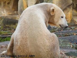 Photo: Ein lieber Blick ueber die Schulter von Knut :-)