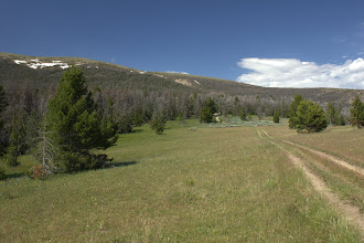 Photo: Most of the whitebark pines in the Big Belts were dead