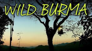 Wild Burma thumbnail