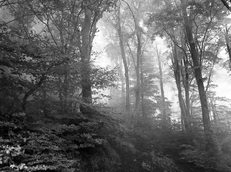 La nebbia nasconde e ci meraviglia di Luciater