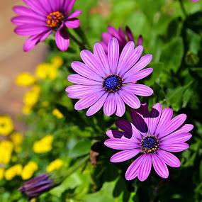 by Stacy Knighton - Flowers Flower Gardens