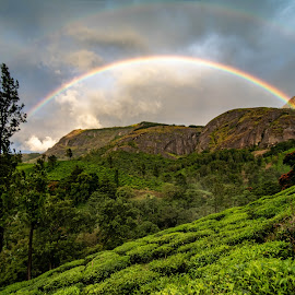 Double Rainbow Over Tea Garden by Prashanth UC - Landscapes Mountains & Hills ( rainbow, nature, hills, weather, tea garden,  )