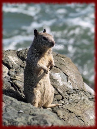Groundhogs wallpapers
