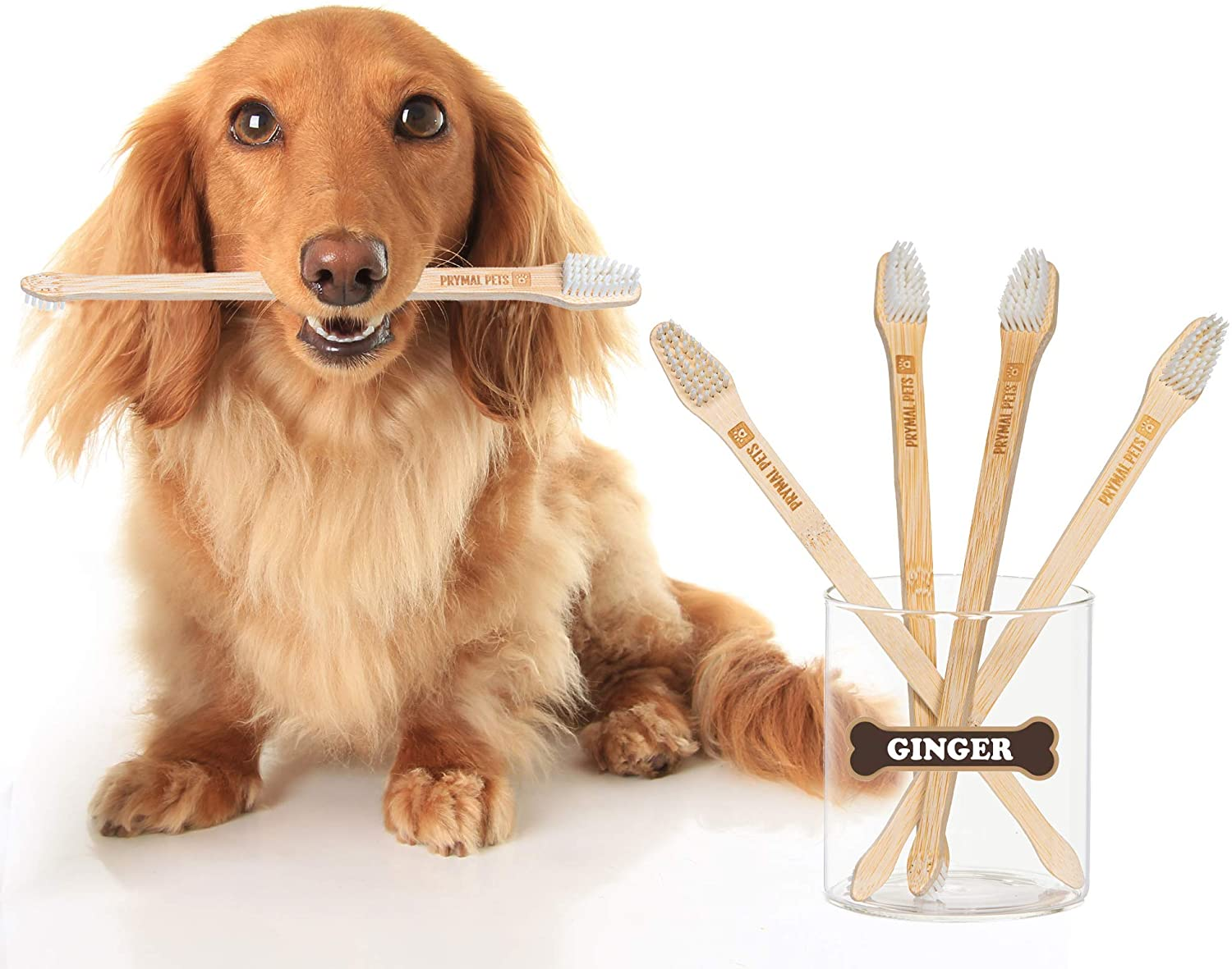 Yellow dog holding a bamboo toothbrush in mouth next to glass of additional toothbrushes