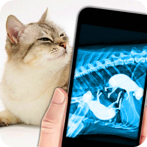 X-Ray Pregnant Cat Joke for PC and MAC