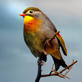 by Judy Rosanno - Animals Birds