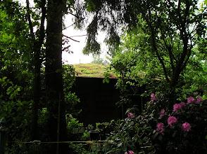 Photo: mooie begroeïng op het dak