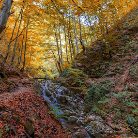 Creek in the forest in Autumn by Grigor  Ivanov - Landscapes Forests ( stream, mountain, colorful, relax, waterfall, wildness, stone, rock, beauty, leaf, yellow, landscape, sun, tranquil, leave, tree, nature, fresh, autumn, foliage, creek, gold, pond, light, wonderful, water, orange, wild, park, green, beautiful, forest, woods, holiday, magic, red, vacation, season, color, cascade, fall, outdoor, peace, background, meditate, meditation, october, natural, golden, river )