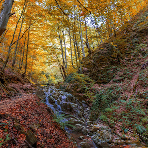 Creek in the forest in Autumn.jpg