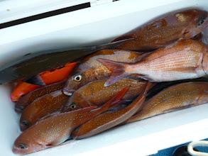 Photo: 本日のトップ賞のフチガミさん!真鯛12枚とオナガ・・・でした!