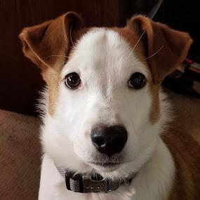 Willie by Ingrid Bjork - Animals - Dogs Portraits ( puppy, dog,  )