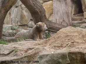 Photo: Eisbaerchen Knut ist noch in der Schlafkuhle ;-)