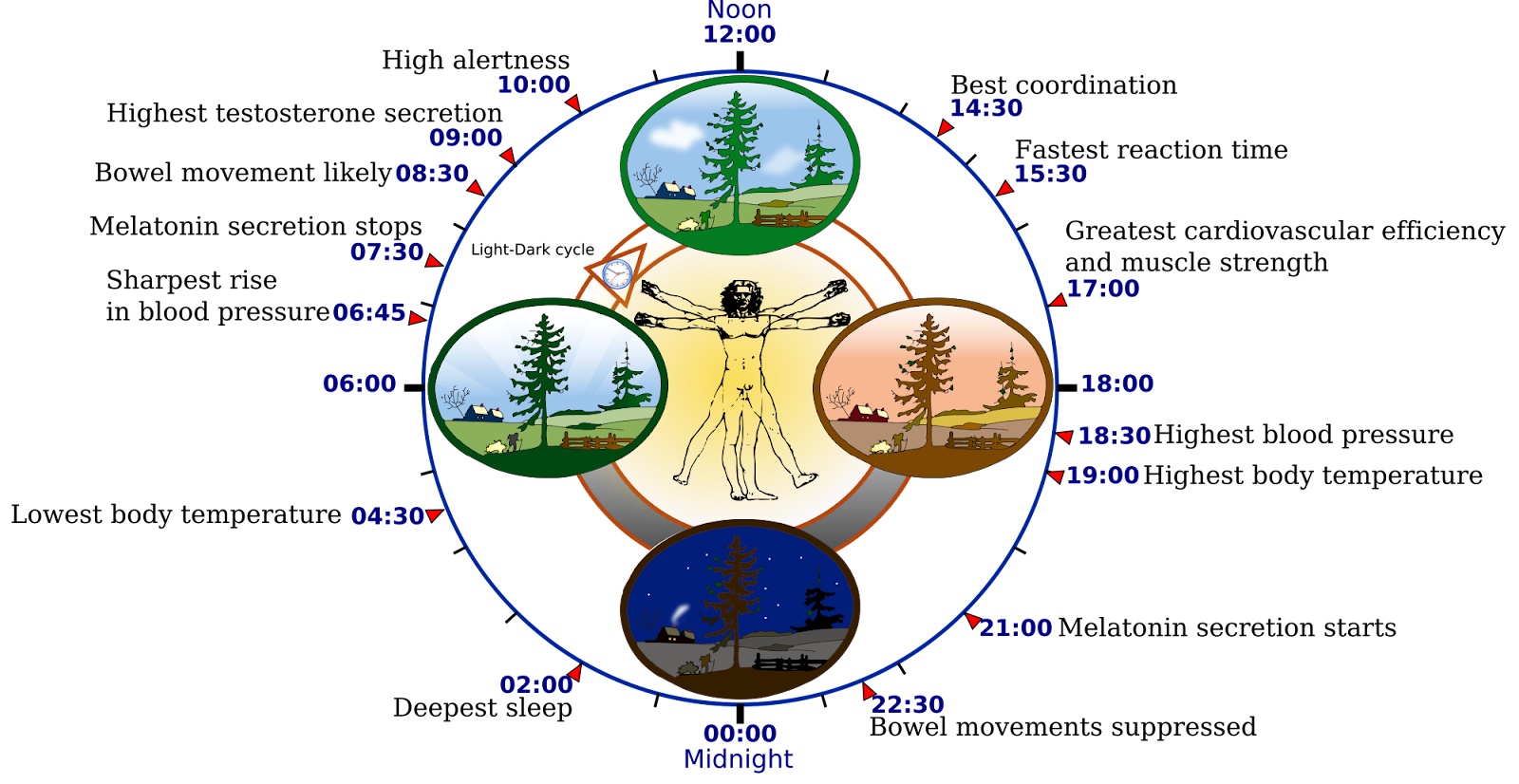slaap verbeteren - circadiaans ritme
