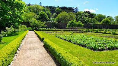 Photo: Luostarin puutarhaa.