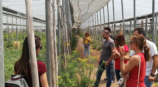 Cursos de formación para jóvenes emprendedores en agricultura ecológica