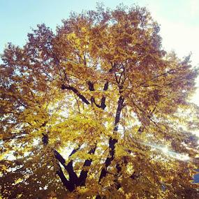 Ahhh ta jesen <3 http://instagr.am/p/RsGdIZr4BN/ by Irena Market - Nature Up Close Trees & Bushes