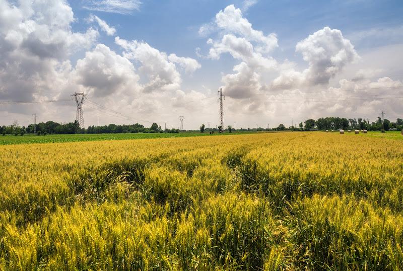 Yellow fields di Illusion