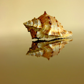 g o n e by Ag Adibudojo - Artistic Objects Other Objects ( snail house, reflection, original )