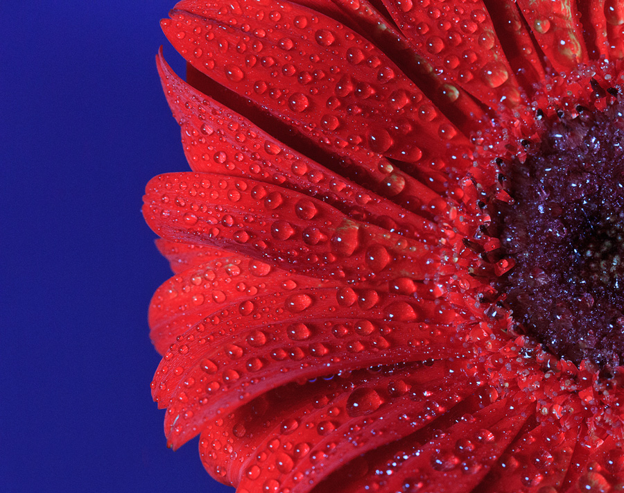 by Muhamad Aris - Nature Up Close Flowers - 2011-2013