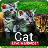 Cute Cat Live Wallpaper-Animated Cat HD Wallpaper