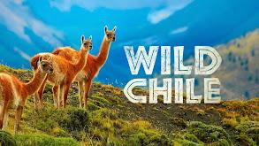 Wild Chile thumbnail