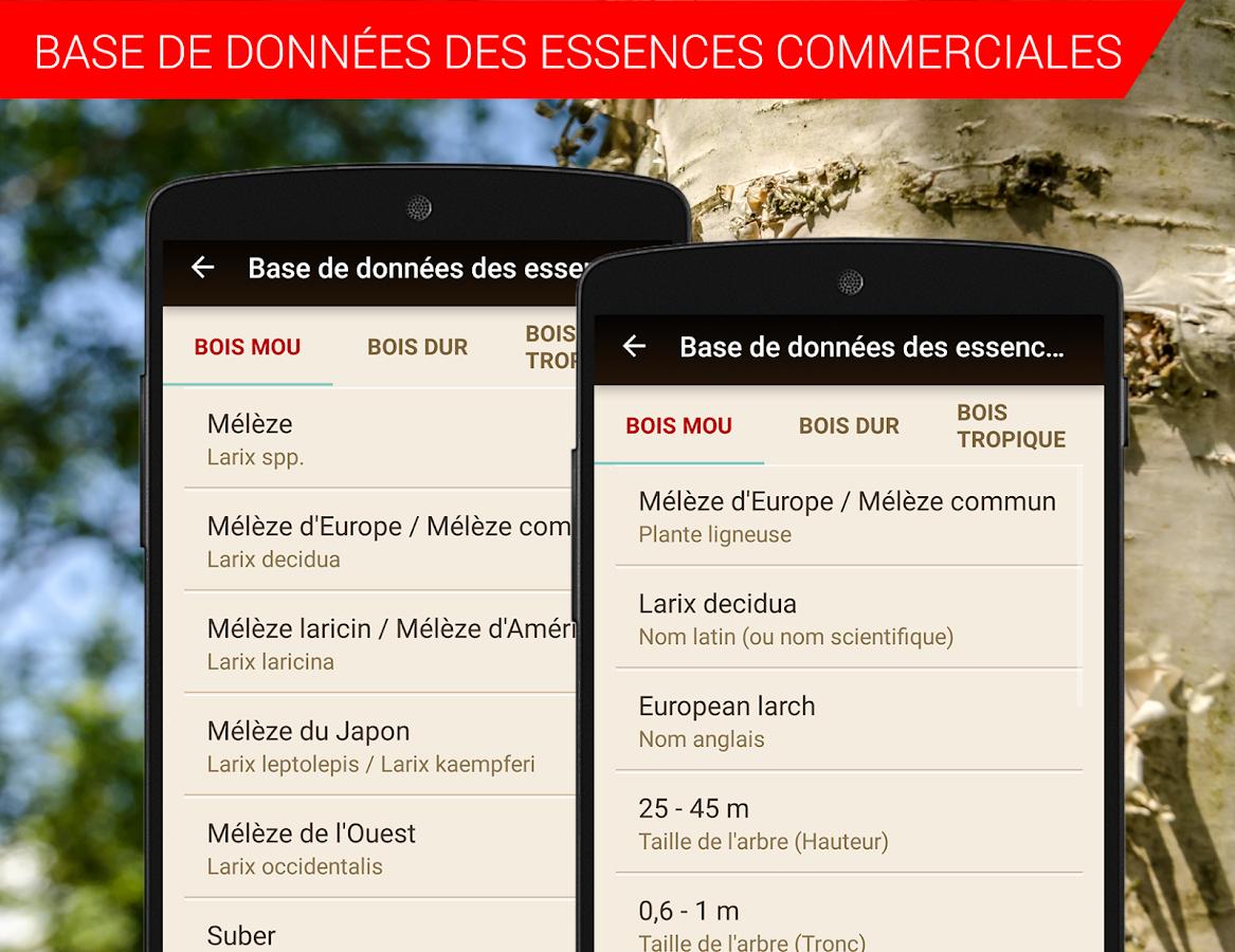 Timberpolis – Applications Android sur Google Pl ~ Calcul Cubage Bois