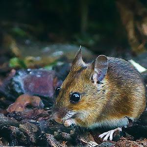 mouse2000px.jpg