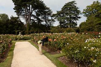 Photo: Stopping to smell the roses at Blenheim Palace