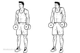 musculation haussements d'épaules