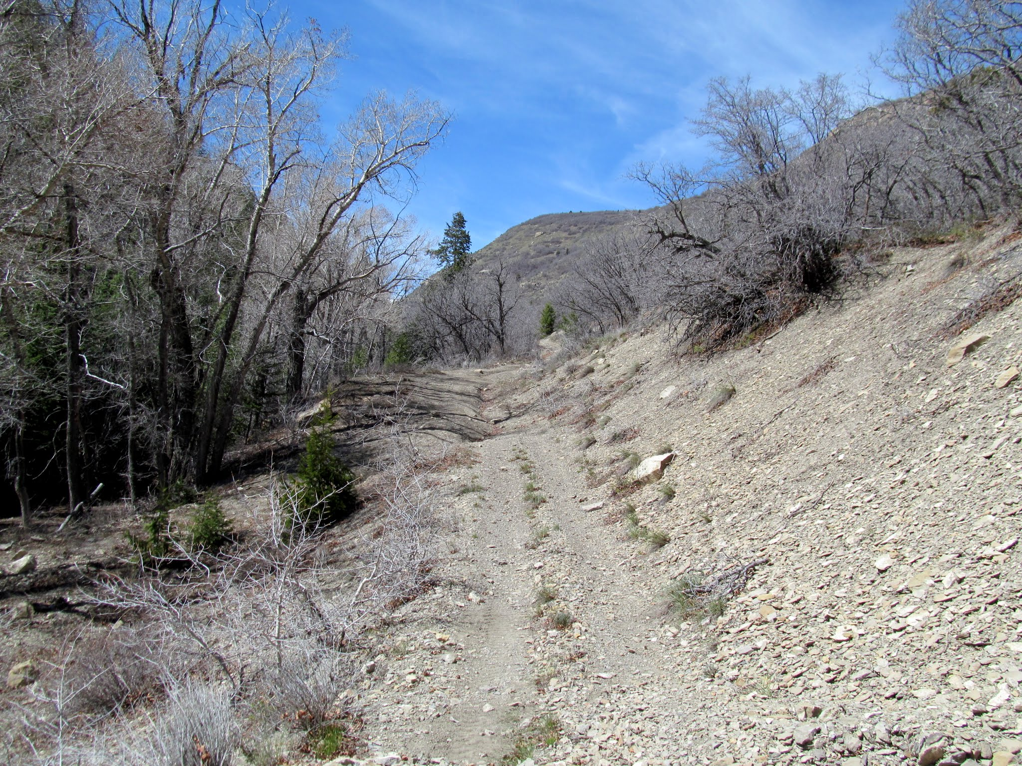 Photo: Ford Creek road