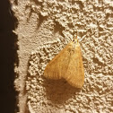 Moth spotting