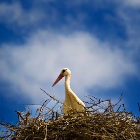 by Abdulmagid alfrgany Photograph - Animals Birds