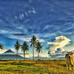 Cow by Rodel Diaz - Animals Other