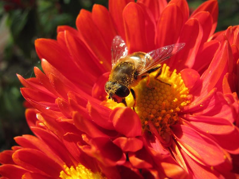 delle api di Airan